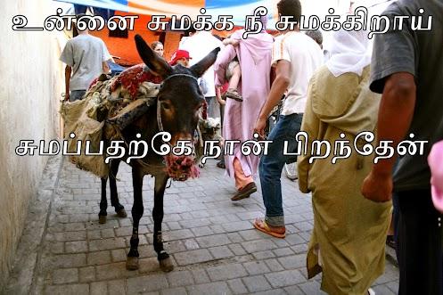 souk - zool donkey